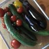 だんだん増えてきた夏野菜