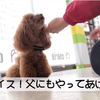 2021.2.13 【愛犬の変わり身】 トレーニング動画を見るとトロの別犬疑惑が再燃します‼️  Uno1ワンチャンネル宇野樹より