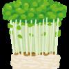 「凪のお暇」でもやっていた豆苗栽培