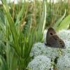 知床で出会った昆虫たち:Insect Encounters in Shiretoko