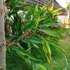 朝から庭掃除&バンコクに出来たドンキホーテ行ってみたい。