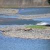 豪雨、白川洪水被害の調査