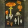 5年生の黒板画.           Pflanzenkunde in der 5.Klasse