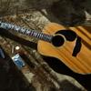 12弦ギターを買いました。
