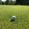 ゴルフは性格の出るスポーツ。白、黄、橙などのボールを一緒に使う人は浮気性?