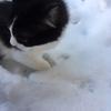 【エムPの昨日夢叶(ゆめかな)】第705回 『猫はこたつで丸くなる。はずが…、愛猫・レフくんは、初雪に大興奮の夢叶なのだ!?』 [1月22日]