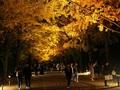 秋の夜散歩とライトアップされた絶景