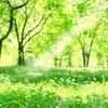 本『森へ行きましょう』人生のあの時のあの選択・・・