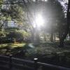 紹介:新宿中央公園の子どもの遊び場紹介するよ