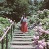190621_昨年の紫陽花