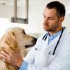 【京都】犬の皮膚病を診てもらえるオススメ病院は?