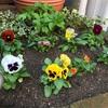 花壇の冬支度と運転代行