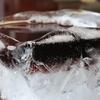 氷の器でアイスコーヒーをつくりたい
