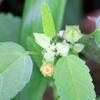 2020年9月の観察記録(植物)