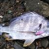 マイクロジグで地形変化に潜む魚を狙ったライトゲーム!!【10目釣るまで終われまテン🐟其の3】