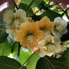 5月は草花がどんどん成長する季節です。-1