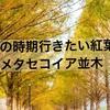 【紅葉・絶景スポット】この時期行きたい絶景~滋賀・メタセコイア並木~前編