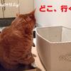 猫さん、玄関で途方に暮れる