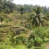 【妄想旅行】インドネシアバリ島でリラックスしたい!