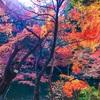 【千葉県で紅葉を楽しむなら成田山新勝寺にある成田山公園がオススメ】