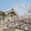 函館公園の桜は…