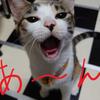 幻魔のレベル開放と猫がムシャムシャ