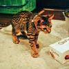 猫のいない生活。そして父からの電話 ~ALEXがうちの子になったのは(前編)~