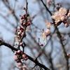 春を歩いて