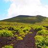 伊豆大島一人キャンプ旅★三原山登山と日本唯一の裏砂漠★