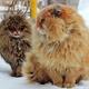 猫は寒さに弱いの?強いの?