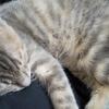 猫騒動の日々・・・