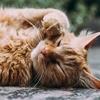【たまには猫旅】愛猫を旅行に連れていく?猫好きにうれしいイベントや観光スポット5選★猫祭り、猫寺、猫フェス