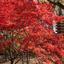 九品仏の紅葉とお菓子の家
