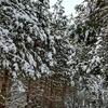 雪国、ヤッホー。