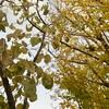 Autumn Leaves (reprise♪)