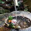 12月の「尼僧と学ぶやさしい仏教講座」では、戒名(法名)について考えてみましょう。