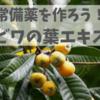 【ハーブ】蚊に刺されたらまずはこれ!簡単に作れる常備薬、ビワの葉エキス