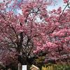 【伊豆旅行】熱海・河津・下田に行って春を先取りしてきた。