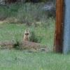 【Day7】プレーリードッグを見つけてきました!ブライスキャニオン国立公園のもう1つの楽しみ方♪~見つけるポイントと買いたくなるお土産~