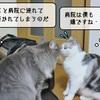 猫の病気 ~むくの帰宅~