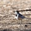 野鳥撮影に行ってきました@奈良山公園&奈良川