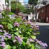 紫陽花の季節/両国 吉良邸跡地