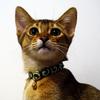 猫の首に鈴を:唐草模様の首輪をつけました