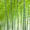 超レアキャラの竹の花・竹の実