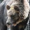 ヒグマによる獣害、日本史上最悪の「三毛別ヒグマ事件」3️⃣