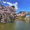 桜と花と新緑、春の湘南をほんの少し