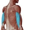 【ベンチプレス】肘の痛みに直結する上腕三頭筋!痛みのケア方法とは?