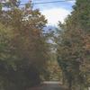 第3回枝払い、樹木等の位置の確認