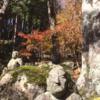 箱根 長安寺の紅葉 (11月21日現在)