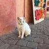モロッコは猫もフレンドリー?マラケシュで出会った猫たち(世界の猫探し247~266匹目)